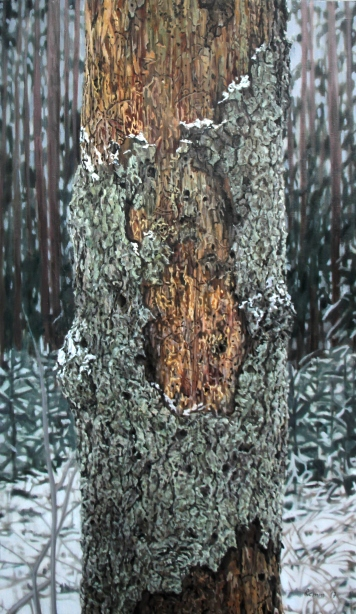 A Spruce in Elva